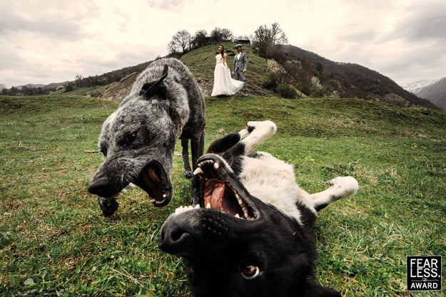These two doggos just reveling in that wedding day joy.