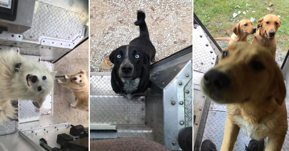This Man's Facebook Group Built A Kindred Community Of UPS Drivers And The Dogs They Meet On Their Routes