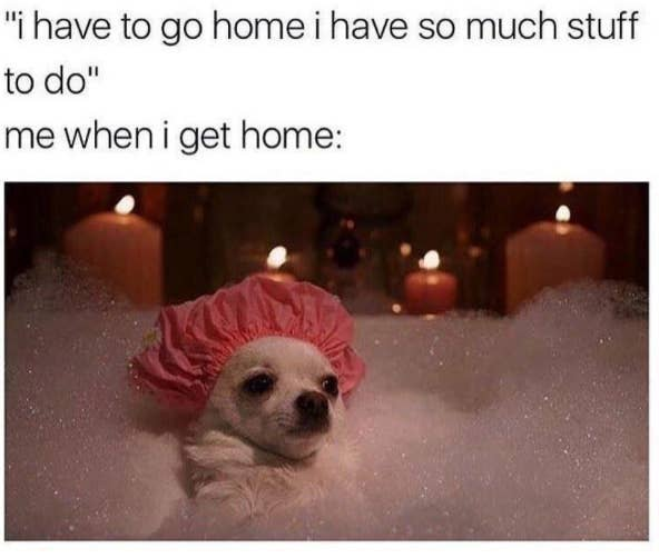 Dog Memes That Are Guaranteed To Put You In A Good Mood - 32 hilarious tumblr posts about animals that will make your day so much better