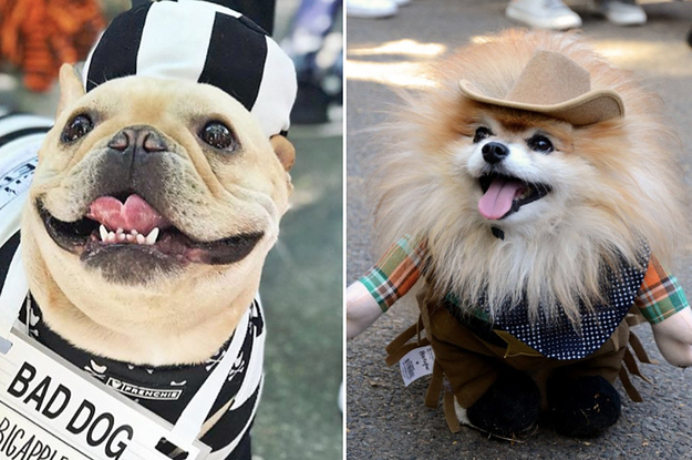 40 Good Boys In Disguise From This Weekend's NYC Halloween Dog Parade
