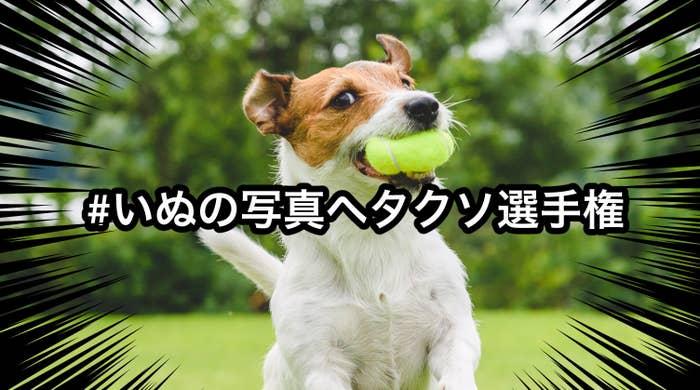 その名も「#いぬの写真ヘタクソ選手権」。全国の愛犬家の方々によって、ちょっとヘタクソに撮れてしまった犬の写真が続々と投稿されています。先日話題になった「#ねこの写真ヘタクソ選手権」の犬バージョンとして盛り上がっているようです!