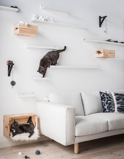 cheap cat wall shelves