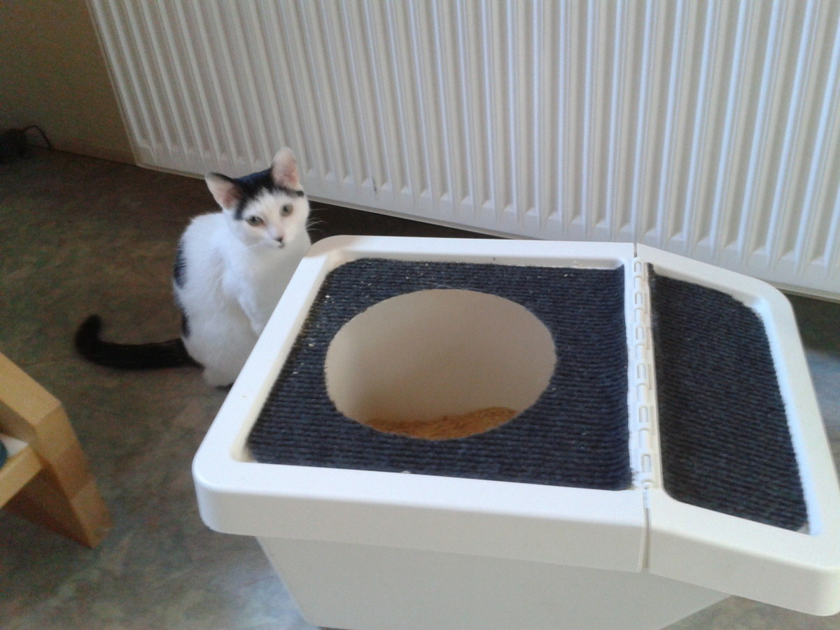 Diy cat box cabinet evanandkatelyncom Hidden This Compact Cat Toilet Jetpack 17 Clever Ikea Hacks That Will Make You And Your Cat Very Happy