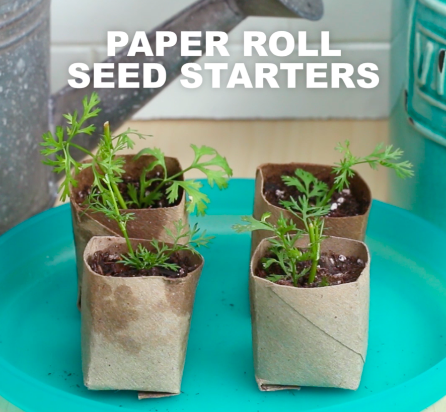 9 Items You Can Upcycle Into Seed Starters
