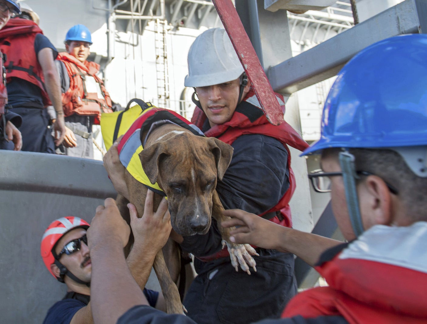 USS Ashland sailors help Zeus, one of two dogs accompanying two Honolulu women who were rescued on Oct. 25 after they were lost at sea for months while trying to sail from Hawaii to Tahiti.