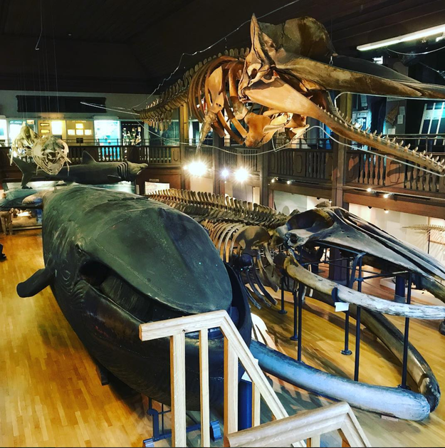 The Natural History Museum in Sweden holds the world's only stuffed blue whale. Its jaws were once open for visitors to enter and explore its insides. But after discovering a couple having sex inside the whale, the museum shut down the jaws, and only have it open for special occasions.