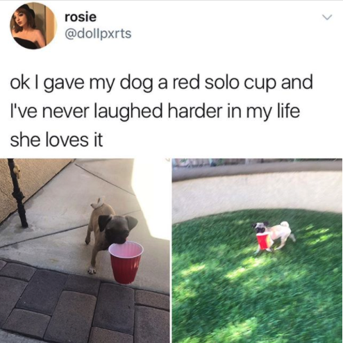 Dog Solo cups: