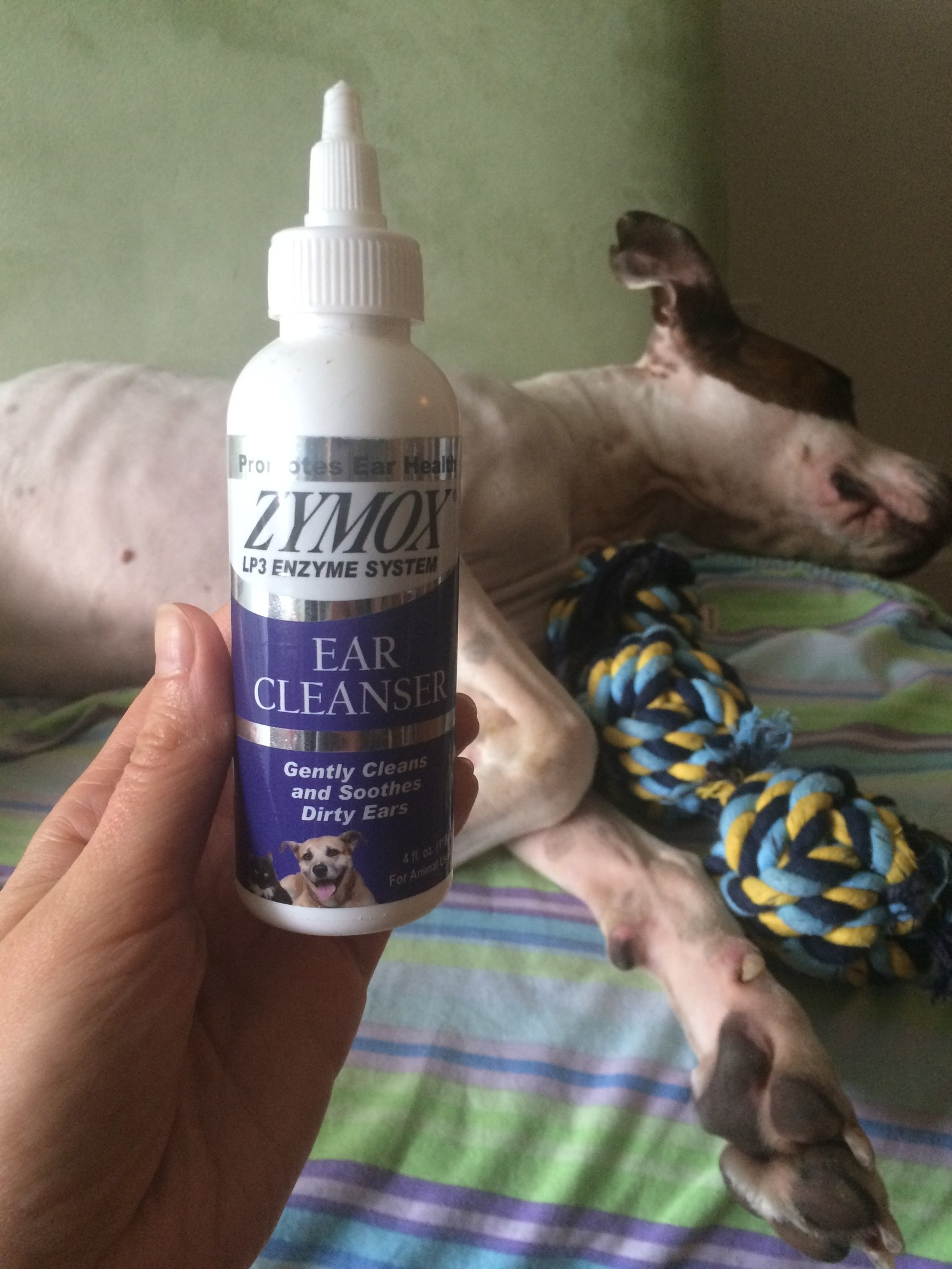 9 Things That Have Actually Helped Relieve My Dog's Allergies