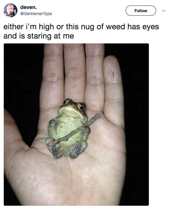 You know you're high when you start seeing nugs: