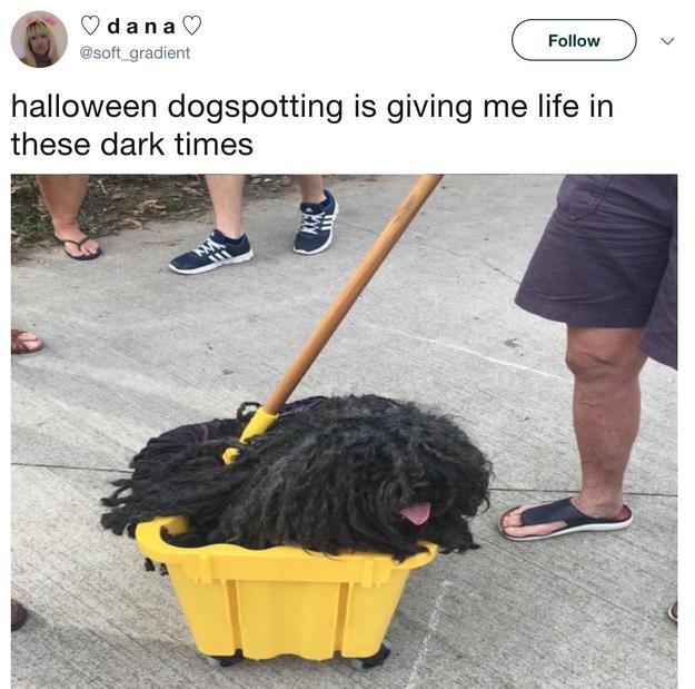A dog mop. A dop:
