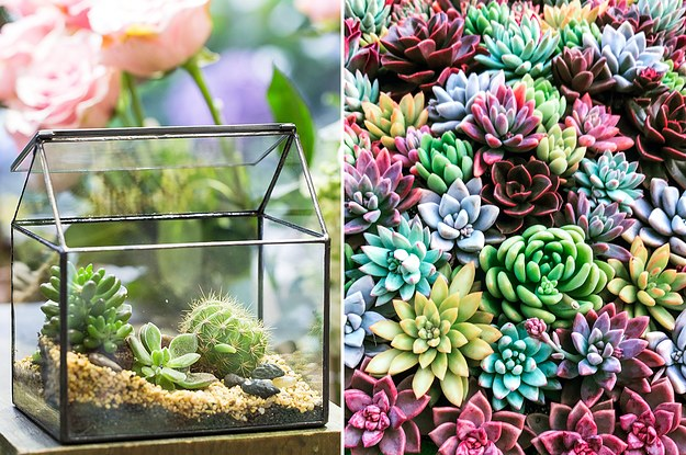 31 Perfect Gifts For Succulent Lovers