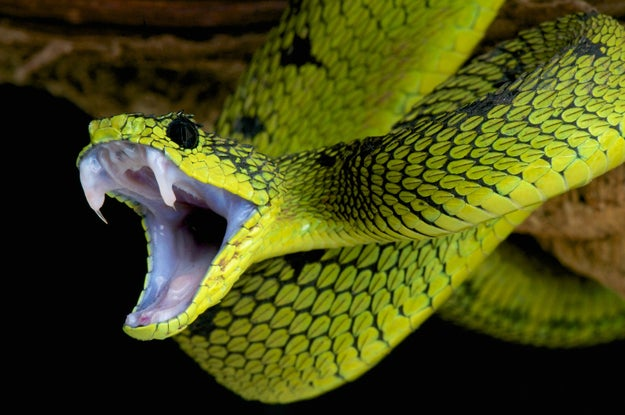 Hi, my name is Julie and I don't like snakes. After careful consideration, one of my main problems with snakes is that they are long and slithery and they don't have legs. This just seems WRONG.