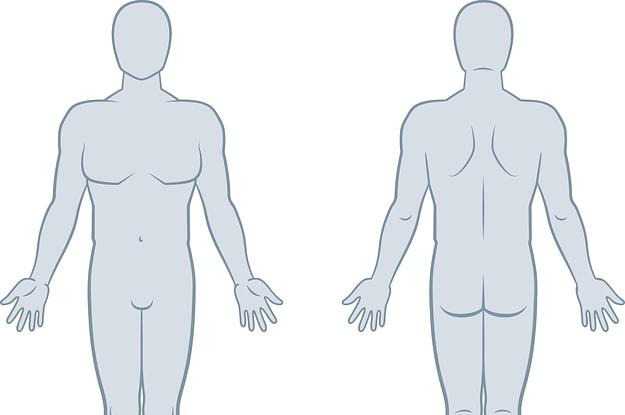 Schneidest du im Anatomietest besser ab als die Teilnehmer dieser Studie?