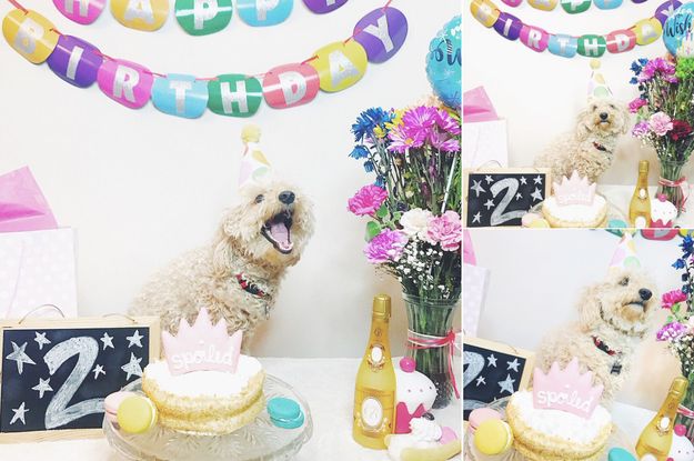 You've gone ALL OUT celebrating your dog's birthday in only the most extravagant way.
