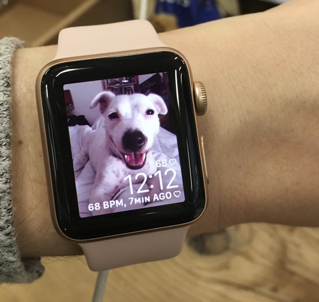 Your background screens on all your electronics are of your adorable furface.
