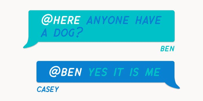 My coworker Ben was looking for a dog owner who would be willing to try the Waterpik® Pet Wand PRO for the sake of content. He went on to add that if there were any chance I had more than one dog, well, that would be even better...Reader, Ben was in luck.