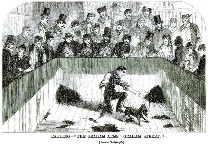 It was practiced in pubs – alongside other brutal and cruel blood sports, such as duckbaiting. One dog called Billy was particularly skilled and killed thousands of rats in his career. In 1832, he set a record of killing 100 rats in 5.5 minutes, which is approximately one rat every 3.3 seconds.