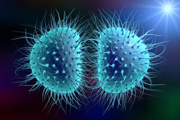 Bacteria Neisseria gonorrhoeae or Neisseria meningitidis, gonococcus and meningococcus, 3D illustration. Bacteria which cause gonorrhoea.