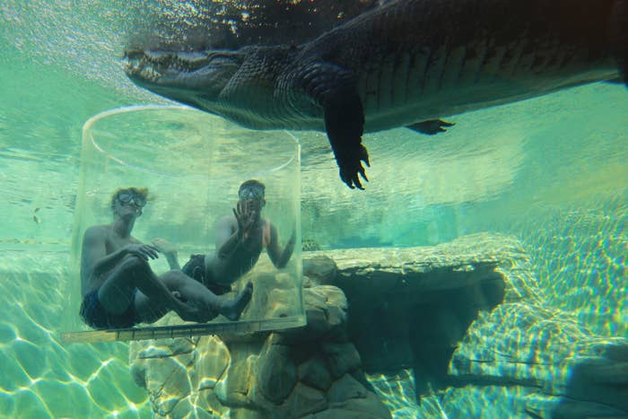 """Want to get up close and personal to a croc, knowing full well you'll come out of it in one piece? Well, the """"cage of death"""" (it's just a name) is Australia's only crocodile cage dive, and has you suspended above the crocs before being lowered into the water for a closer look at these incredible giants."""