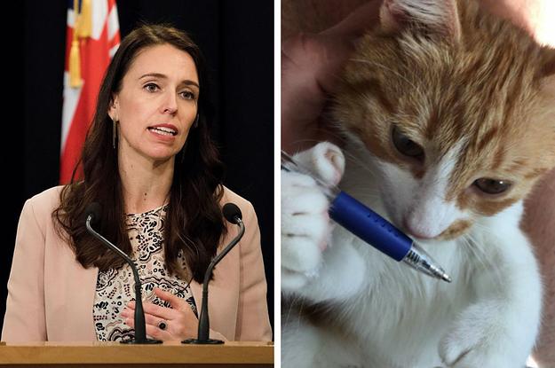 Jacinda Ardern Pinterest: Jacinda Ardern's Cat, The Internet-Famous Paddles, Has Died