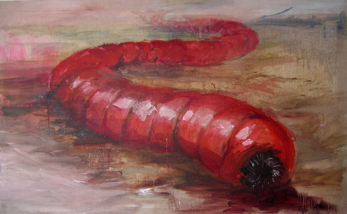 """UMMMM: """"Se supone que los gusanos miden entre 60 y 150 cm y tienen cuerpos gruesos""""."""