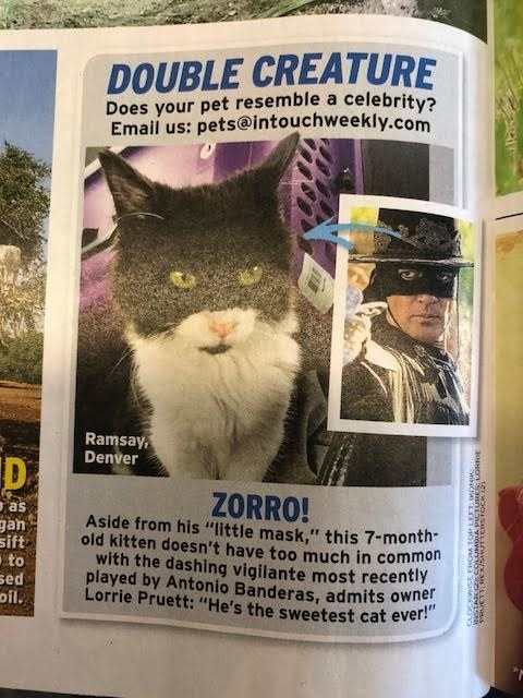 Anyway, here's a photo of a cat that looks like Zorro, bye!