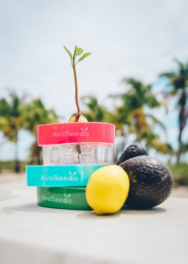 A kit that lets you grow your own avocado because yeah, money doesn't grow on trees, but avocados do.
