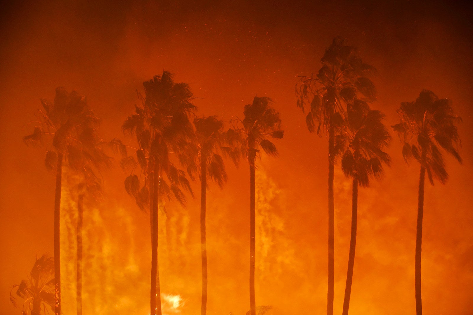 Palm trees are shown ablaze as the Thomas Fire threatens homes in Ventura, California, on Dec. 5.