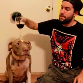This dog, who isn't psyched about his new role as a sommelier's assistant.