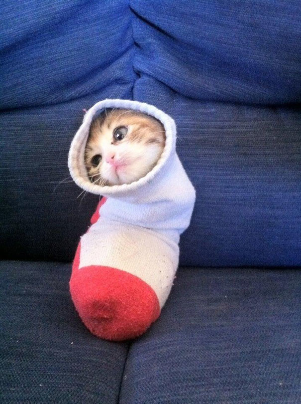 This cat, who is now a sock.