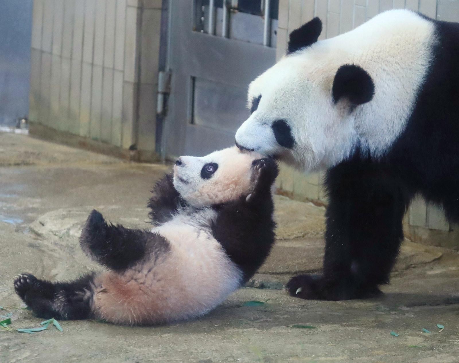 上野動物園によると、パンダは来場者に興奮することもなく、