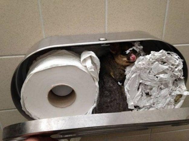 This public restroom:
