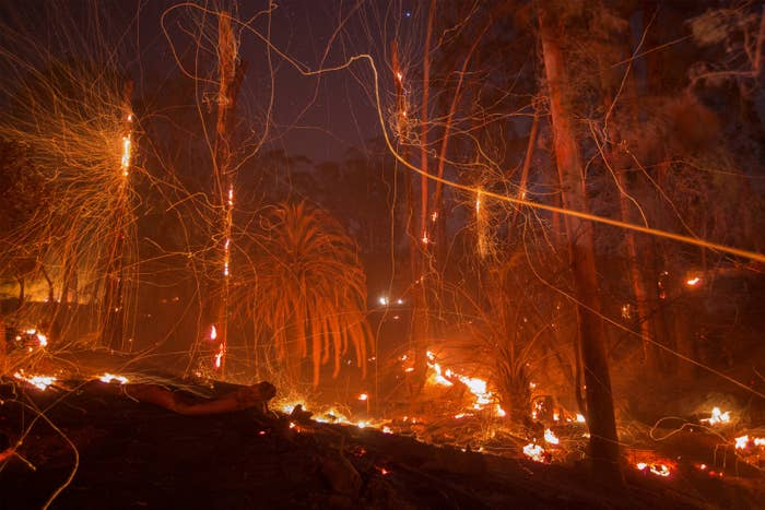 A strong wind blows embers from smoldering trees at the Thomas Fire on Dec. 16 in Montecito, California.