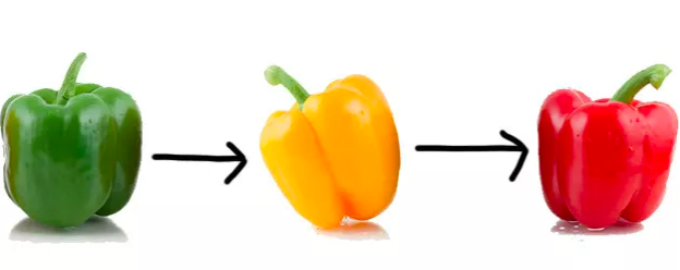 Green peppers actually ripen into yellow and orange peppers, which then eventually turn into red peppers. (Some peppers just ripen to yellow or orange, but still, they start out green.)Learn more: I Just Learned The Truth About Bell Peppers And WHAT THE HELL?