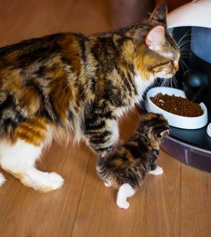 Y si lo tuyo son los gatos, este dispensador automático de comida y agua es otro de los mejores gadgets de 2017 que tienes que conocer.