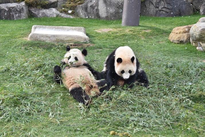 くだるパンダがかわいい