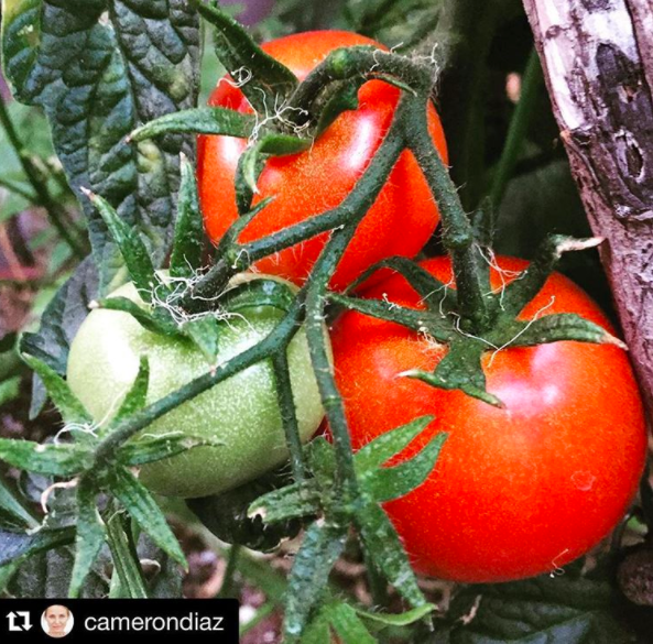"When she stalked Cameron Diaz's Instagram, reposted a 42-week-old picture of her cherry tomatoes, and came out as a ""Something About Mary"" fan."