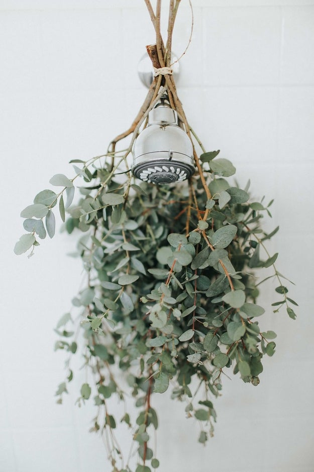 Hang bundles of eucalyptus on your shower head for a refreshing smell every time you turn on the hot water.