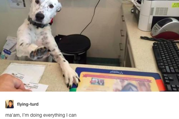 19 Tumblr Posts That Will Make Every Dog Lover Cry Tears Of Joy