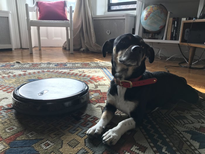 A few months ago, my girlfriend bought us a Roomba. Well not a Roomba, but the Deebot N79, the robot vacuum that the Wirecutter recommends. My fantasy was that it would be my dog's best friend. I imagined King, who is a 20-pound dachshund mix, going for rides on the Deebot around our small apartment, napping next to it as it charged, and nosing it away from hazards. Instead, when we turned the machine on for the first time, King barked at it and ran away. Alas.What the Deebot is very good for is sucking up King's fur, which is short and black and gets freaking everywhere. We run it a few times a week, it rarely gets stuck, and while it occasionally forms strange obsessions with certain hyperspecific locations in our bedroom, like a deranged Ouija planchette, most often it gets the job done. This has made my girlfriend less ornery and me less defensive. It has had no effect on my dog. Still, tech in 2017 that makes life a little bit better instead of cataclysmically worse: What a relief!—Joseph Bernstein