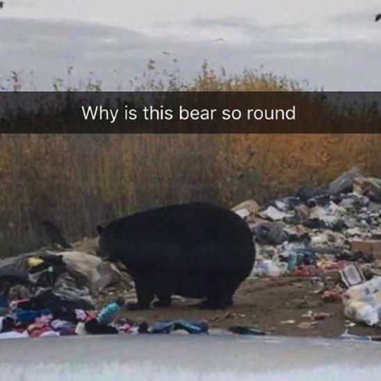 Me as a bear: