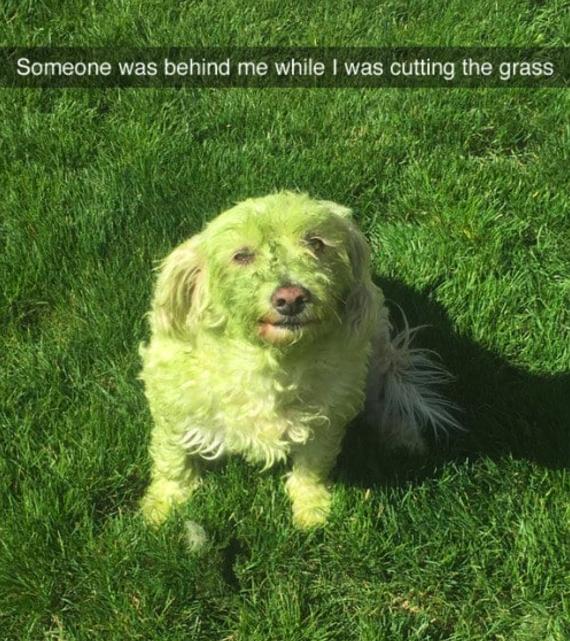 Dog Hulk: