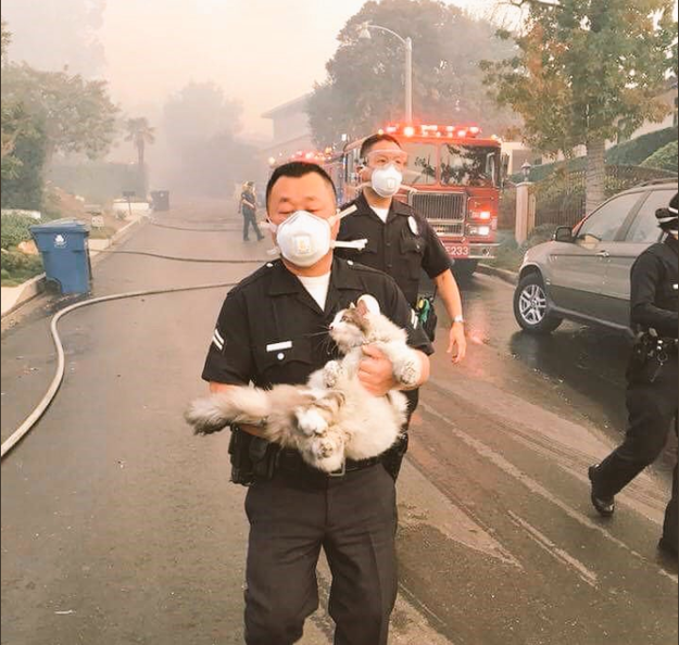 The LA Police Department touched the hearts of pet owners after sharing a photo of one of its officers saving a cat from the wildfires sweeping the area.