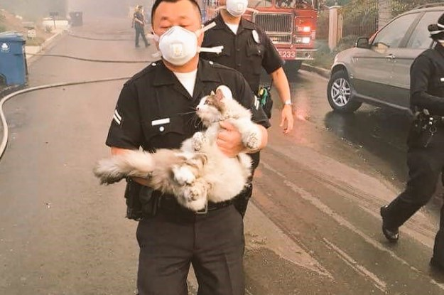 The LAPD Wrote A Message About Saving Pets From The Fires That Will Make Pet Owners Weep