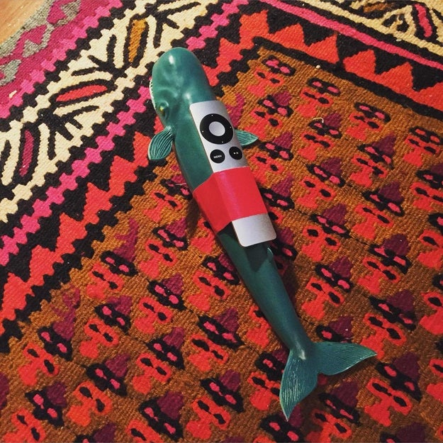 A toy whale: