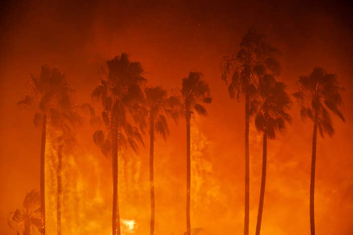 Smoke blows out of burning palm trees on Dec. 5, in Ventura, California.