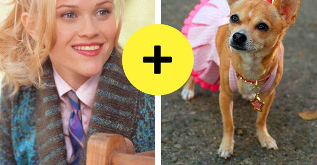 Everyone Has A Dog Breed That Matches Their Personality — Here's Yours