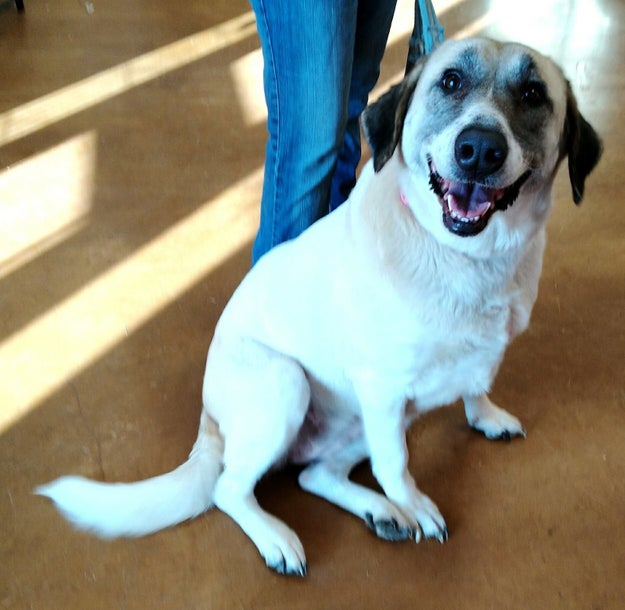 This is Cathleen, a very very good dog who managed to make the 20-mile trek back to a family in Oklahoma that couldn't keep her.