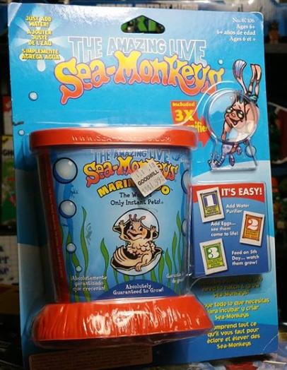 Sea monkeys.
