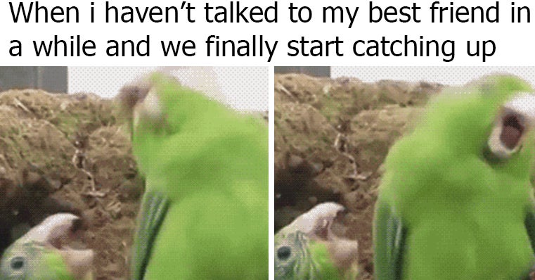 24 memes that are super relatable if you u0026 39 ve been best